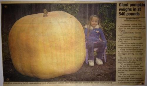Giant-Pumpkin-Tsawwassen-Delta-Optimist